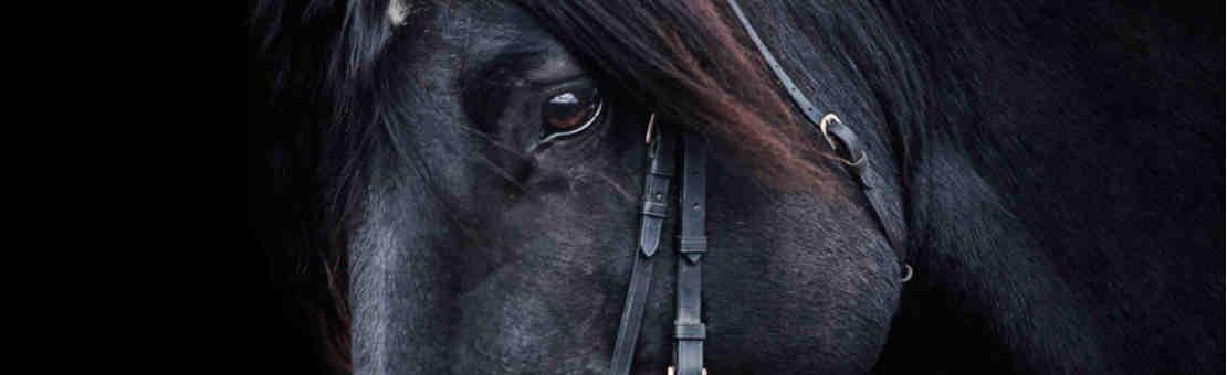Artículos para el caballo